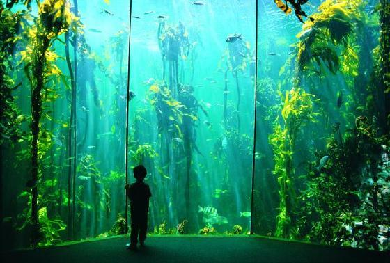 Hire a Car to visit Two Oceans Aquarium | Around About Cars