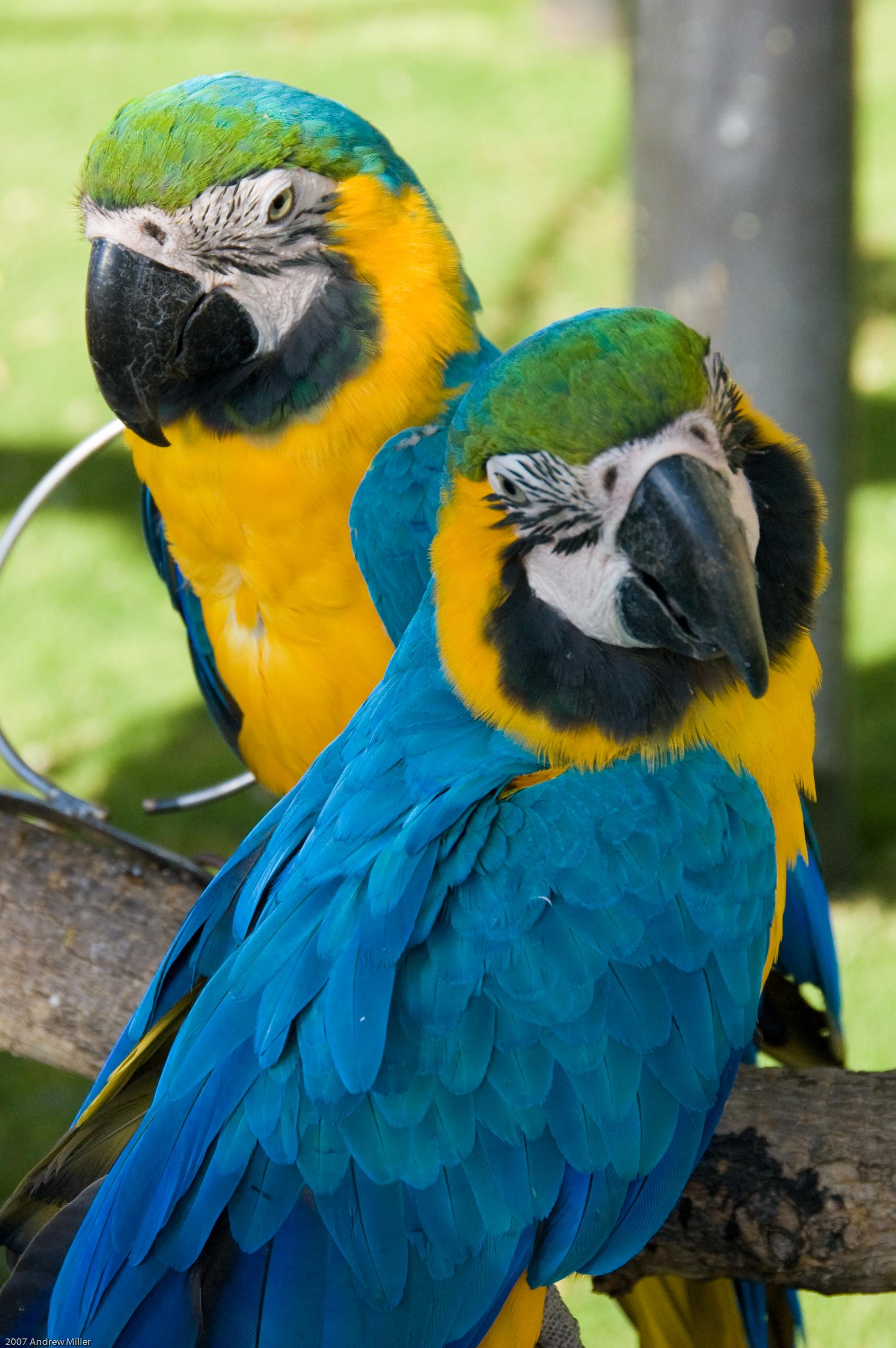 Birds of Eden. Photo Credit: Andrew Miller-flickr