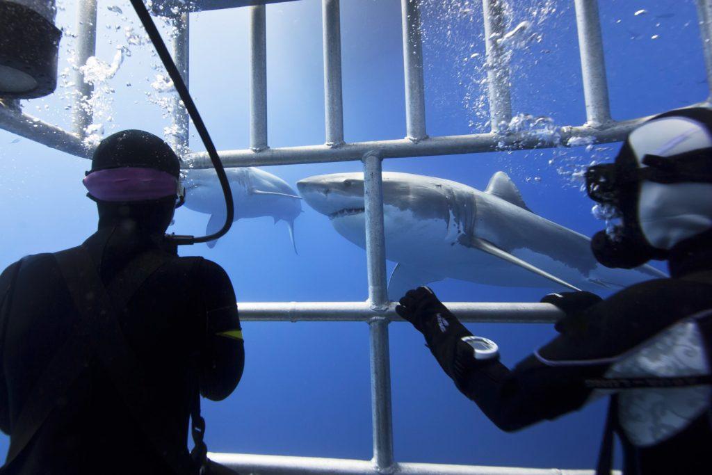 ACC Shark cage -min