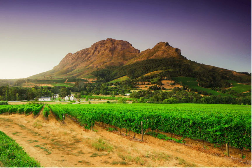car-hire-cape-town-stellenbosch-wine-farm -min