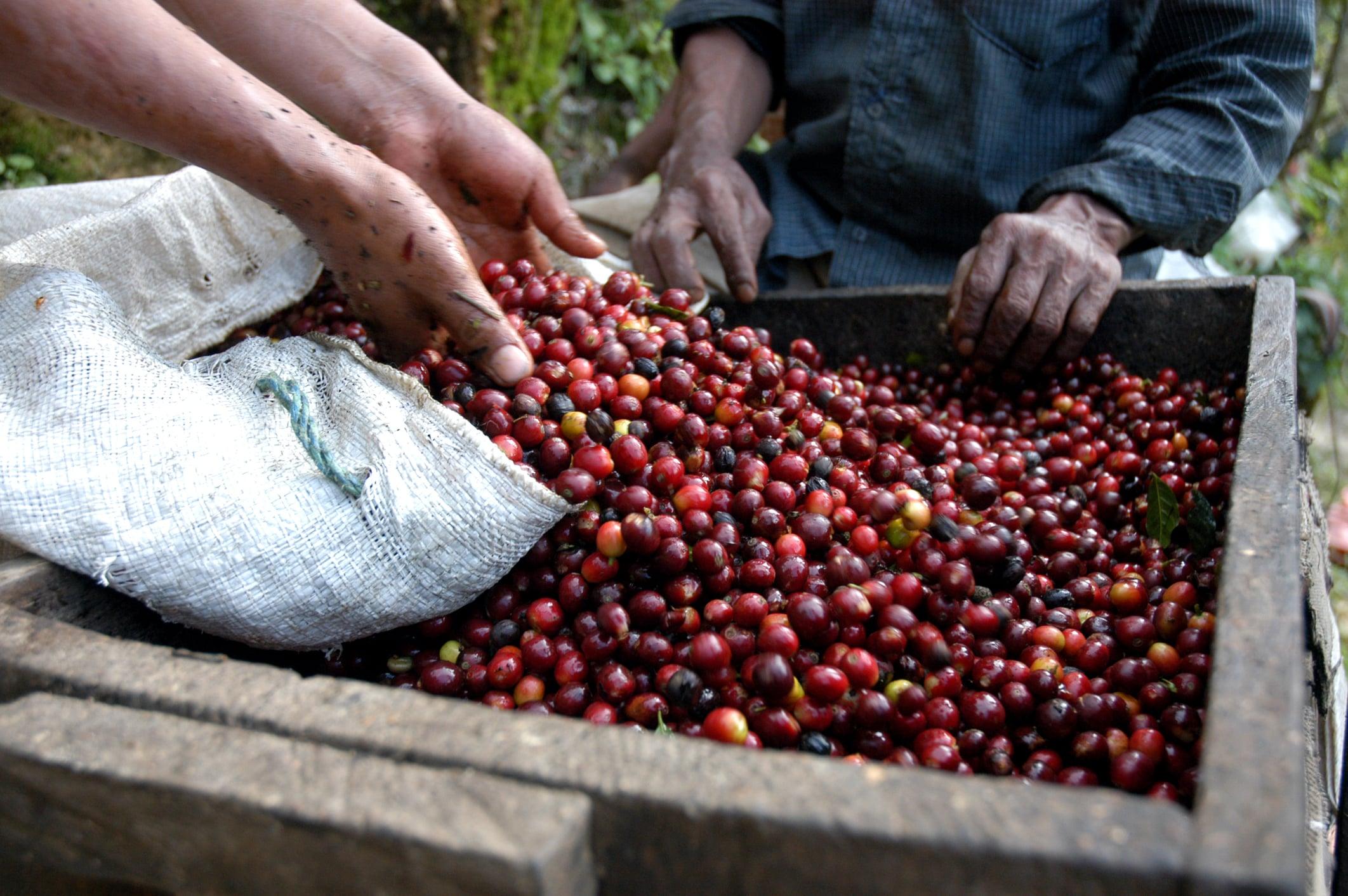 coffee-beans-guatemala-5429582-min