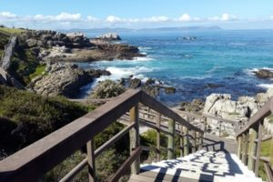 13 Into-the-bush-with-a-car-hire-Johannesburg-hermanus-min