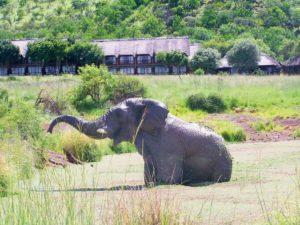 Visit-Sun-City-with-your-Johannesburg-car-rental-sarafi-min