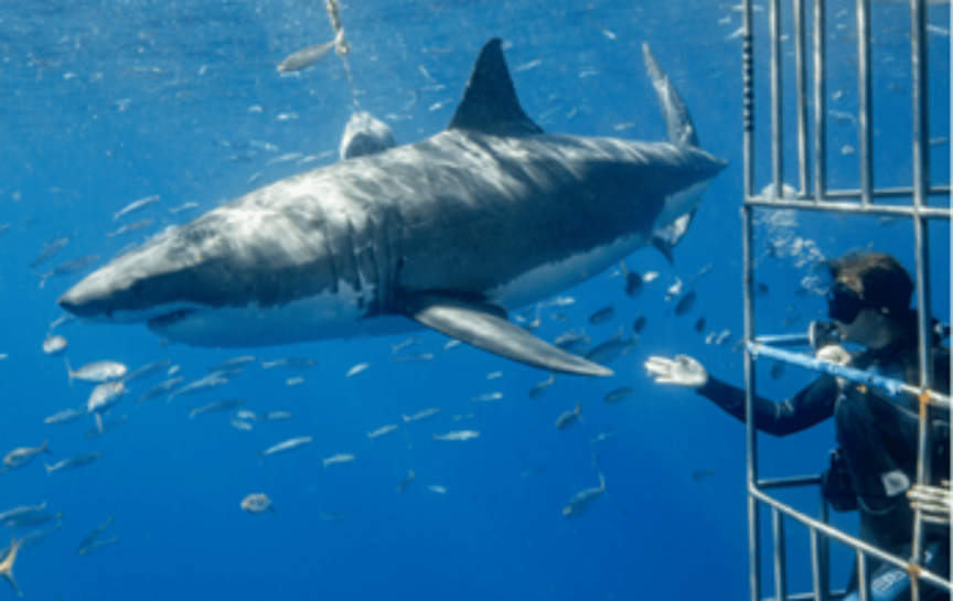 car-hire-cape-town-shark-cage-diving-min