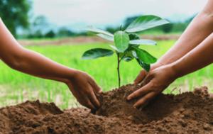car-hire-cape-town-tree-planting-min