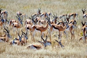 7 Reach-for-the-stars-with-your-car-hire-Johannesburg-Kgalagadi-Transfrontier-National-Park-min