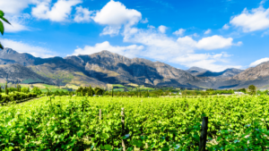 car-hire-cape-town-vineyards-of-the-cape-winelands-in-the-franschhoek-valley-min