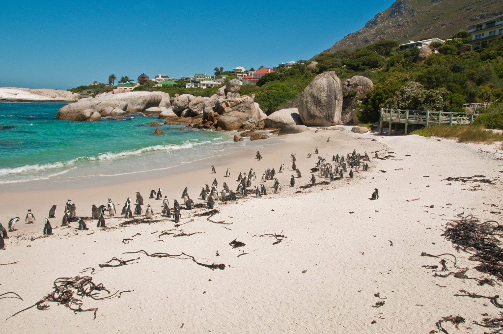 BOULDERS BEACH - CAPE TOWN WITH KIDS - Around About Cars