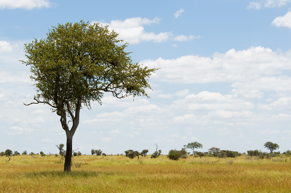 Kruger National Park - Around About Cars