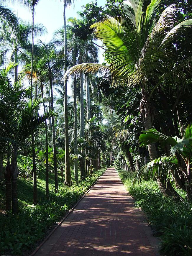Durban Botanical Garden - Around About Cars