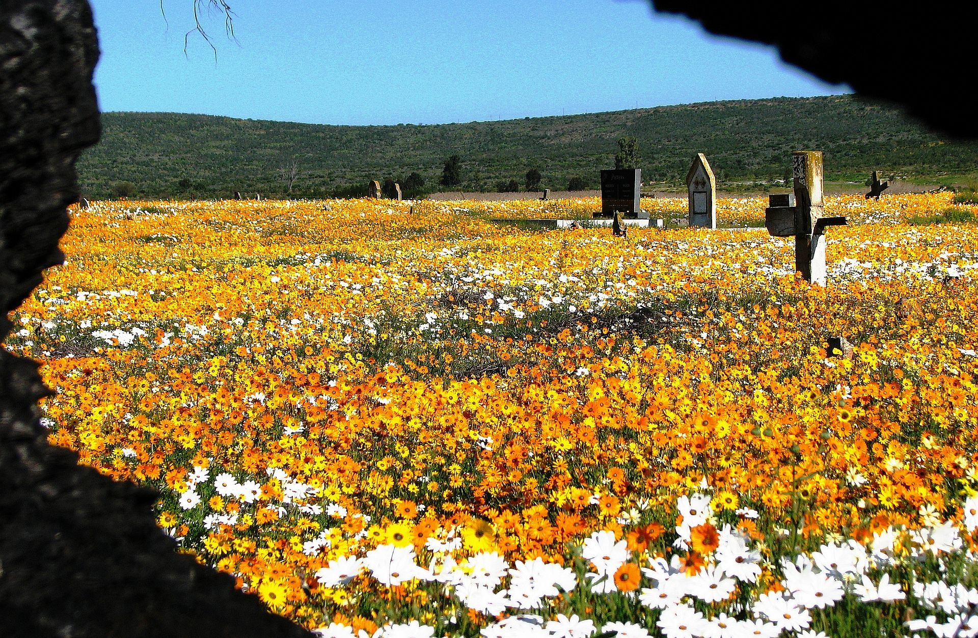 Namaqualand Flowers Graveyard - Around About Cars