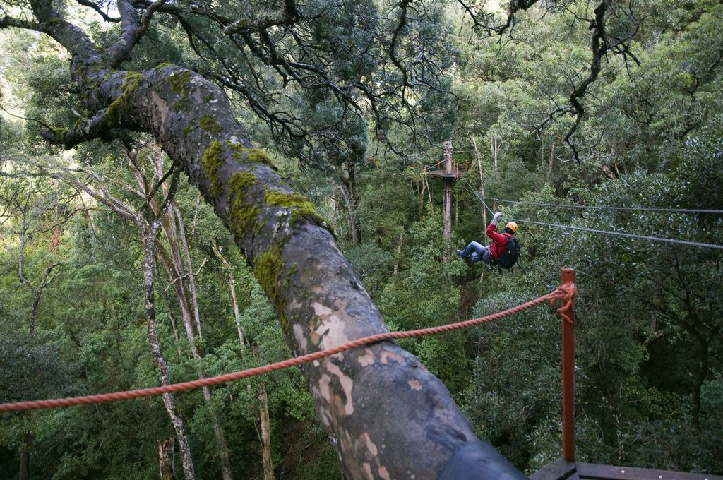 Tsitsikamma Canopy Tours - Around About Cars