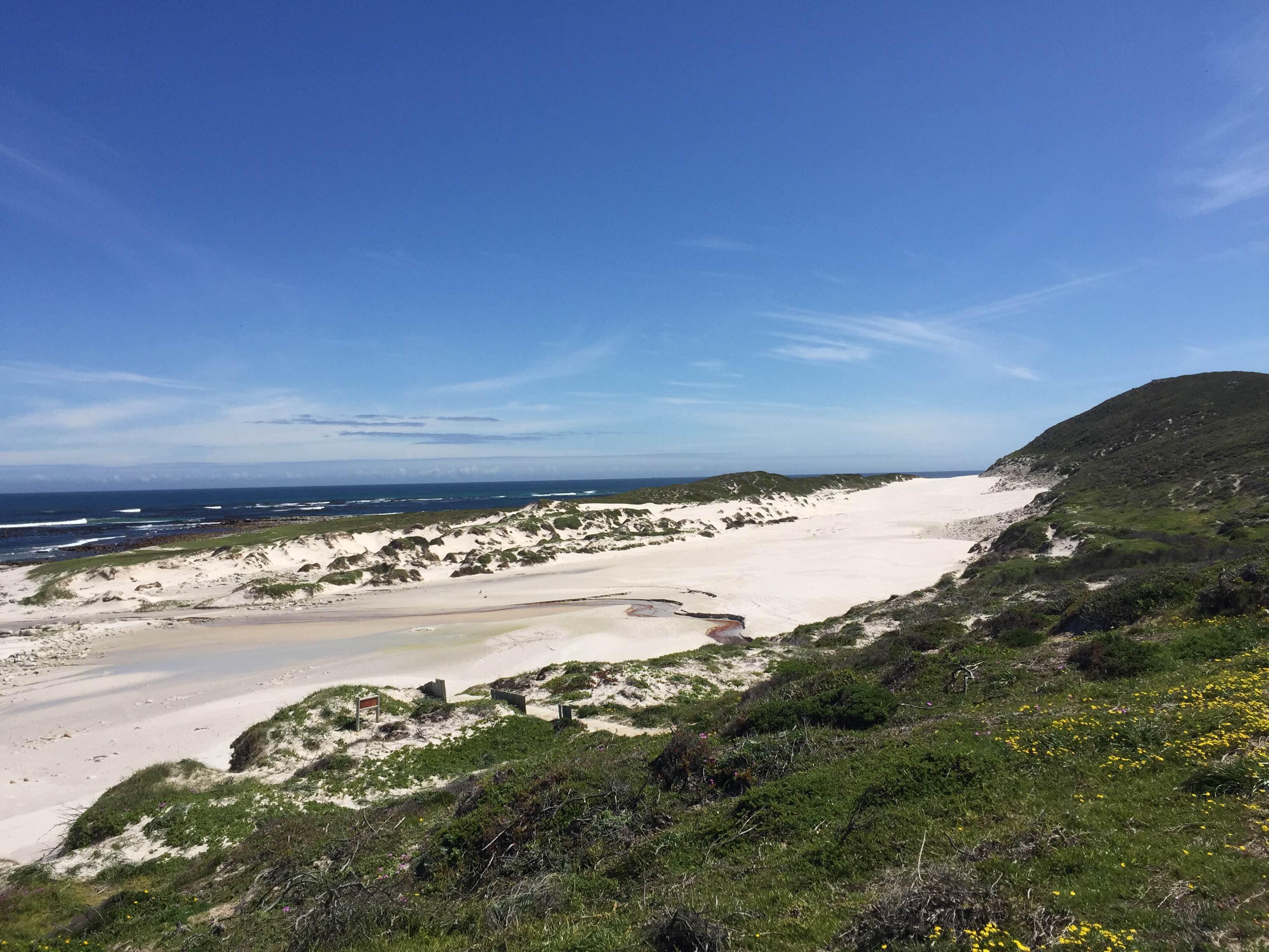 Fauna Flora Cape Point Table Mountain National Park.