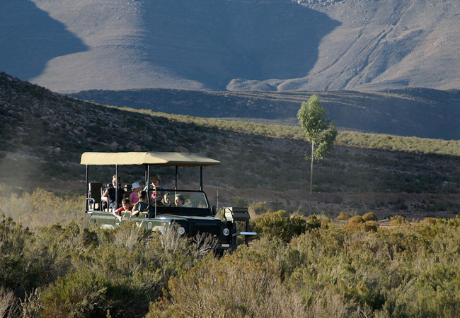 Game Drive at Aquila Game Reserve.