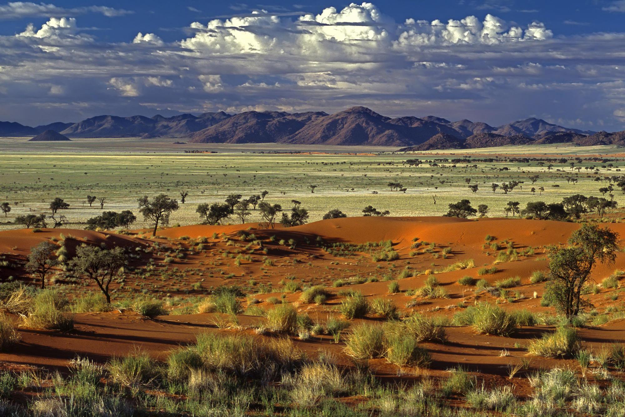 Tok Tokkie Desert Landscape Nimibia.