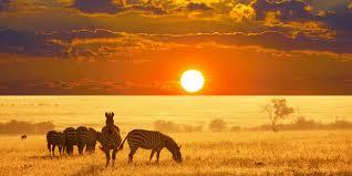 Zebra in Namibia.